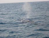 الحوت يغنى.. علماء يسجلون صوت غناء حوت نادر فى المحيط الهادى ..فيديو