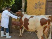 28 مديرية بيطرية تكثف حملاتها بأسواق اللحوم للتأكد من سلامة المعروض فى العيد