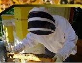شاهد.. أمريكية تربى 100 ألف نحلة على شرفة منزلها بواشنطن