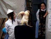 صور.. بالدجاج والمياه يتخلص اليهود المتشددون من ذنوبهم استعدادا ليوم الغفران