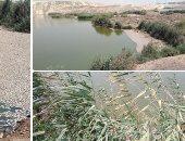 رئيس مدينة الخانكة: بحيرة الاستزراع السمكى بلا أسماك نافقة