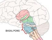 اعرف جسمك.. هل يوجد جسر فى الدماغ وكيف يعمل؟