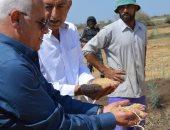 صور.. محافظ بورسعيد يشهد حصاد محصول الأرز بسهل الطين