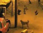 قارئه تشكو من انتشار الكلاب الضالة بمدينة 6 اكتوبر