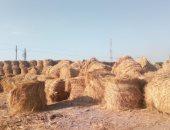 حصاد 91 % من الأرز وتحرير 175 محضر حرق قش بكفر الشيخ