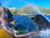 شاهد عجائب وطرائف.. معركة عنيفة بين فقمة وأخطبوط فى نيوزيلندا