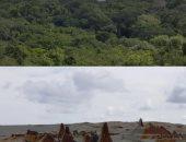 """هل عاش هنا 11 مليون إنسان؟.. أهرامات و61 ألف أثر """"مخفى"""" تحت غابات جواتيمالا"""