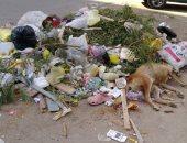 شكوى من انتشار القمامة بمساكن ضباط زهراء مدينة نصر