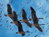مسئولة الأمم المتحدة للبيئة: الطيور المهاجرة تتأثر بتغير المناخ