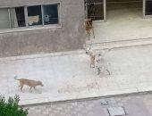 شكوى من انتشار الكلاب الضالة بمنطقة مساكن شيراتون بمصر الجديدة