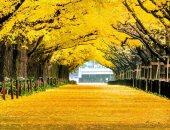 طبيعة مذهلة.. شاهد كيف يبدو الخريف بجميع دول العالم × 6 صور