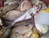 إعدام 500 كيلو سمك غير صالحة للاستهلاك بمدينة البلينا جنوب سوهاج