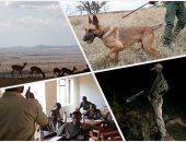 صور.. التكنولوجيا وسيلة الحراس التنزانيين لمحاربة الصيادين المخالفين فى المحميات الطبيعية.. تقنية حديثة ترصد حركة الحيوانات وتتنبأ بالأخطار قبل حدوثها.. ومسئول يؤكد أن مهمة الحراس أصبحت أكثر سهولة وفاعلية