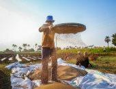 """""""الزراعة"""": لجان متابعة للسمسم لزيادة المساحات والإنتاج .. اعرف التفاصيل"""