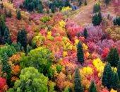 أشجار ولاية يوتا الشمالية فى فصل الخريف لوحة فنية