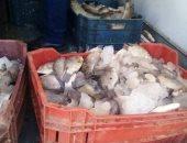 صور.. إعدام نصف طن اسماك غير صالحة للاستهلاك الادمى