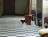 قارئ يشكو انتشار القطط والقمامة بقسم الأشعة بمستشفى جامعة أسيوط