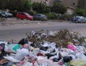 قارئ يشكو تراكم القمامة وانتشار الكلاب الضالة بزهراء مدينة نصر