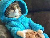 """خطأ موظف متدرب..  إيميل الخارجية الأمريكية يدعو لـ""""حفلة قطة بالبيجاما"""""""