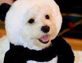 دلع كلبك.. ابتكار ملابس واكسسوارات للكلاب على شكل الباندا