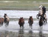 فيديو.. رجل يخاطر بحياته لإنقاذ خيوله من الأمطار الغزيرة