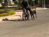"""فيديو وصور.. """"ميدو"""" يصطحب كلبه """"الدانماركي العظيم"""" في جولة بالدراجة"""