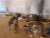 صور.. قارئ يشكو من انتشار القمامة أسفل كوبرى الدائرى اتجاه أحمد عرابى