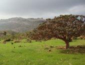 مؤتمر دولى حول جزيرة سقطرى اليمنية المسجلة على قائمة اليونسكو.. غدا