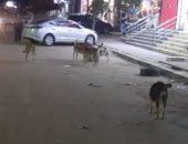 شكوى من انتشار الكلاب الضالة بشارع سهل حمزة فى الجيزة
