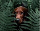 """الحياة السرية لـ """"تروجا"""".. رحلات """"كلبة"""" خلال الطبيعة النرويجية الساحرة"""