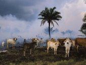 تقرير يحذر: الأرض فقدت 60% من حيواناتها منذ 1970 بسبب البشر