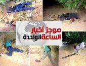 موجز أخبار مصر 1 ظهرا.. الجيش يعلن قتل 10 تكفيريين وتدمير 25 سيارة فى سيناء