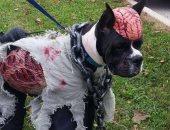 """صور.. الكلاب تشارك فى احتفالات الهالوين بملابس واكسسوارات """"مرعبة"""""""