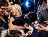 طرائف الحيوانات فى حفلات الزفاف × 15 صورة