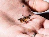 مهندسون فى جامعة واشنطن يطورون روبوتا طائرا على شكل حشرة