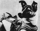 """""""لايكا"""" أول كلبة تصعد إلى الفضاء .. هل ماتت قبل أن تكمل رحلتها؟"""