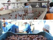 التصديرى للصناعات الغذائية يدرس مضاعفة صادرات مصر من التمور