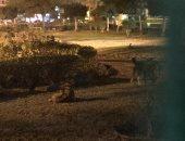 الكلاب الضالة تسبب الذعر لسكان شارع جمال الدين عفيفى بمدينة نصر
