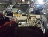 الكلاب الضالة تروع أهالى شارع حافظ رمضان بمدينة نصر