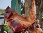 مجهولون يضعون رأس خنزير على مدخل معبد يهودى فى تل أبيب.. فيديو