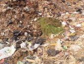 شكوى من تراكم القمامة بالعزبة الغربية فى شبين الكوم