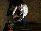 شاهد.. احتفاء قناة العربية بالاكتشاف الأثرى الجديد فى سقارة