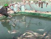"""نفوق الأسماك فى نهر الفرات وخسائر فادحة للعراقيين """"فيديو"""""""
