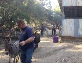صور.. جمعية الرفق بالحيوان تخلى الحيوانات من مناطق الحرائق بكاليفورنيا
