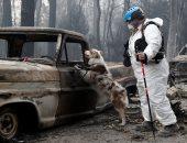 صور.. كلاب غابات كاليفورنيا تبحث عن أصحابها بعد حرائق أودت بحياة 50 شخصا