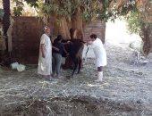 لجنة مكبرة من الطب البيطرى لرش الحيوانات بغرب أسوان