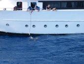 محميات البحر الأحمر تعلن توصلها لبيانات المركب ملقى الأطعمة للقروش لمشاهدتها