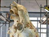 وزنه 200 كيلوجرام ويسمع من على بُعد 3 كيلومتر . ما لا تعرفه عن قلب الحوت