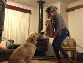 عندها مشاعر.. شاهد فرحة كلب بعد إحضار جرو صغير لمرافقته فى البيت