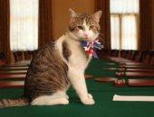 رحلت تيريزا ماى وبقى القط لارى.. كبير صائدى الفئران مستمر فى حكومة بريطانيا